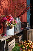 Flowers in milk churns on wooden bench; wooden crates & apples on floor below