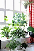 Various pot plants in front of a transom window