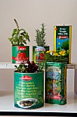 Fresh herbs planted in tins