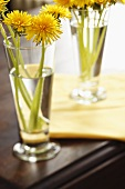 Dandelions in Glasses on a Table