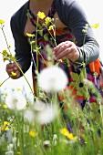 A girl picking buttercups in a field