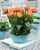 Orangefarbene Tulpen & Vergißmeinnicht in Pflanzschale