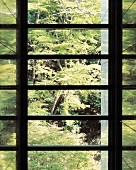 View through a modern glazed window at the forest