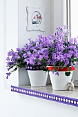 Purple flowers in white pots with decorative bands around the lip, on a white window shelf decorated with a decorative strip