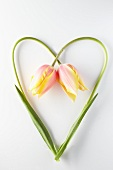 Two tulips with stems in a heart shape