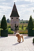 A dog crossing the terrace of a garden with a small garden house