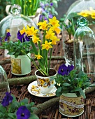 Daffodils and pansies in various pots