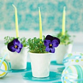 Egg cups planted with cress and decorated with candles and viola flowers