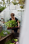 A woman carrying tomato plants out of a greenhouse