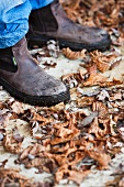 A person wearing garden shoes standing in autumnal leaves