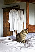 Cat on white bedspread; white nightclothes hanging on wardrobe in background