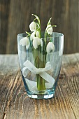 Snowdrops with bow in glass