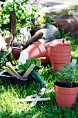 Empty and planted plant pots and other garden utensils on lawn