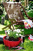 Red hanging basket of oxeye daisies in front of deckchair and gardening gloves