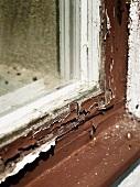 Fensterrahmen mit abgeblätterter Farbe