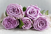Five violet, scented roses lying on table