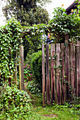 Climber-covered, wooden garden fence with open gate showing view of blooming garden