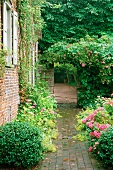 Rustic, paved garden path and roses next to house with climber-covered brick facade. Gateway leading to outdoor space beyond.