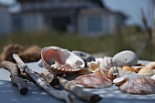 Various shells and driftwood in sunlight