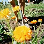 Gardening in a flowerbed