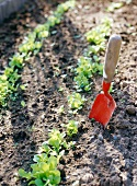 Small, red trowel in salad bed