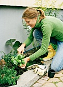 A woman planting basil in a bed