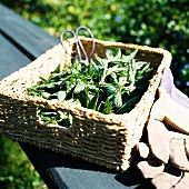 Nettles and herb scissors in a basket