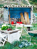 Old garden table with vegetables, wheelbarrow and shed