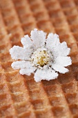 Candied daisy on waffle