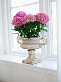 Pink hydrangeas in antique, Greek-style planter