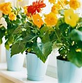 Summer flowers in enamel pots