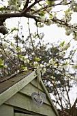 Flowering fruit tree next to garden shed