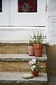 Blumentöpfe auf der Treppe vor der Eingangstür