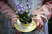Woman holding violas planted in teacup