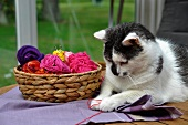 Cat playing with wool next to basket
