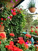 Red geraniums and Oriental lanterns on lushly-planted, small balcony