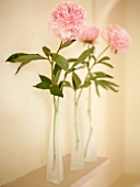 Row of pale pink peonies in narrow glass vases