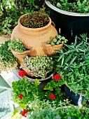 Assorted plant pots
