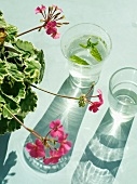 Pink geraniums next to glasses with mint leaves floating in water