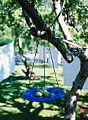 Blue plate with apples hanging in a tree