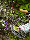 Seeds and garden gloves in a wire basket