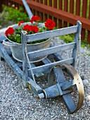 Galvanized pail with geraniums on a wheelbarrow