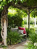 Wooden bench with cushions amongst ornamental grasses below creeper-covered pergola