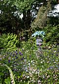 Blühende Akelei in verschiedenen Farben im wilden Garten