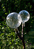 Zwei klare Glaskugeln auf einem gegabelten Ast