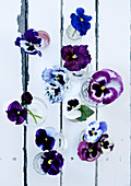 Violas in glasses on old garden table