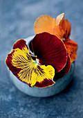 Violas in small spherical vase