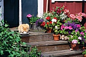 Cat in front of a saucer of milk and plant pots on wooden stairs