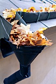Autumn leaves on a roof and in a rain gutter
