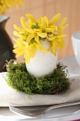 Forsythia in Easter egg on moss as table decoration